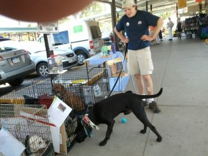 Last Day Dog Rescue brought out almost 10 days to the Mity Nice Second Sunday.